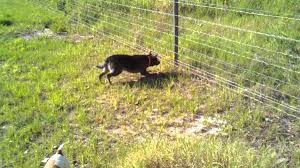 Electric Fencing For Dogs Fence Ideas