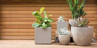 7 best pot plants for your garden