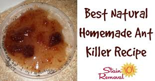 best natural homemade ant recipe