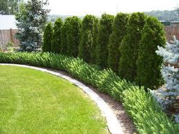 landscaping along a fence ideas tlc