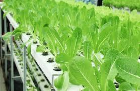diy hydroponics hydroponic systems