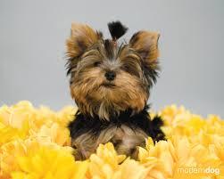 puppies free modern dog wallpaper