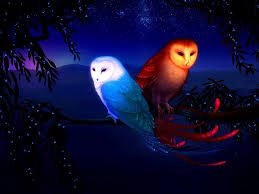 Cool Owl Wallpapers Group (72+)
