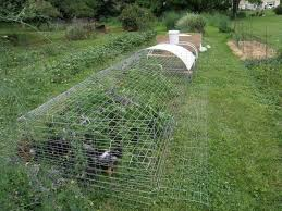 Easy Chicken Run Plans Backyard Chickens Learn How To Raise Chickens