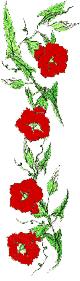 Flamenco - Adela Clara - Biography