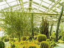 cactus desert plant green nature