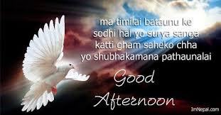 good afternoon sms in i quotes messages