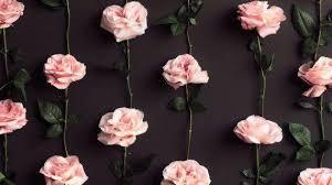 bunga mawa beda warna beda arti kaskus
