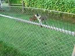 Chain Link Fence Extension Yard Chain Link Fence For Dogs Home Depot Chain Link Fence Post Extension Dog Proof Fence Dog Jumping Fence Chain Link Fence