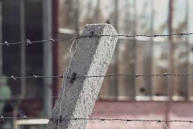 Barbed Wire Barbed Wire Fence Post Prison Barrier Security Close Up Fence Demarcation Wire Metal Pikist