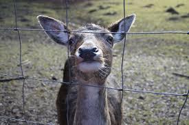 Top 7 Deer Fences To Keep Deer Away In 2020 Animal Hype