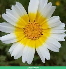 صور زهور جميلة جدا عالم الزهور Amino
