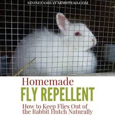 flies out of the rabbit hutch