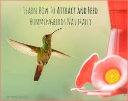 hummingbird food recipe and how to