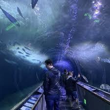 aquarium of the bay check