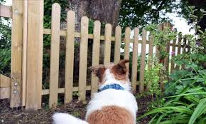 Rufus The Dog Restricted By Jacksons Fencing Jacksons Fencing