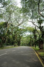 arcadia road herie roads gardens