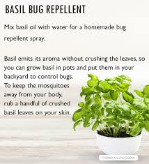 nontoxic insect bug and mosquito spray