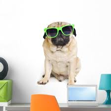 Cool Pug With Sunglasses Wall Decal Wallmonkeys Com
