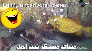مشاهد مضحكة تحت الماء فكاهية مقالب Funny Underwater Scenes