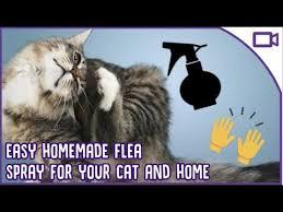 treating fleas at home diy flea