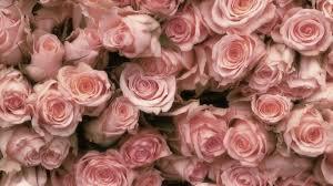 pastel roses wallpapers top free