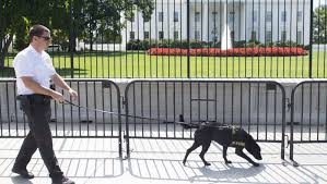 White House Fence May Get Spikes