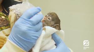 houston zoo caretakers work to help