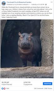 cincinnati zoo is bringing the zoo to