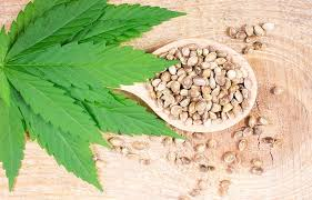 Buy Marijuana Seeds in Arizona - Pacific Seed Bank