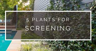 5 Plants For Screening Definition Landscape And Design