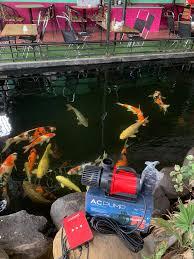 Máy bơm, phụ kiện lọc nước hồ cá Koi... - Máy bơm, phụ kiện lọc nước hồ cá  Koi
