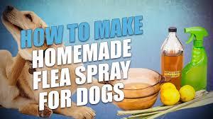 diy homemade flea spray for dogs 3