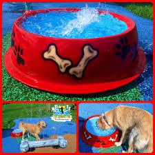 dog water park dog bowl water play
