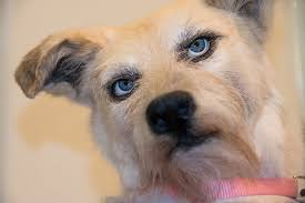 cutest dog breeds in the world that