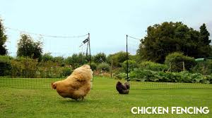 Omlet Chicken Fencing Available At Four Legs Or Wings Pets Youtube