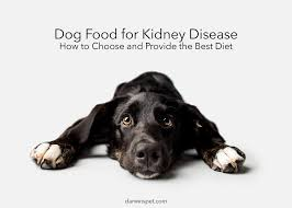 dog food for kidney disease guide
