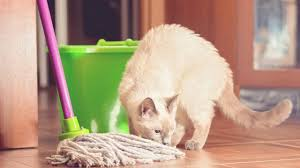 the 6 best ways to clean cat in