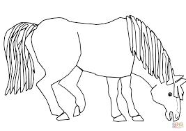 Blauw Paard Blauw Paard Wat Zie Je Kleurplaat Gratis