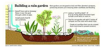 building a rain garden is a creative