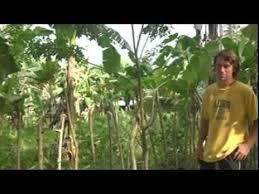 Mindanao Philippines Living Fence 1 Of 2 Youtube