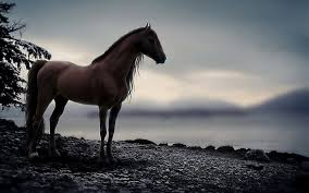 free hd horse wallpaper