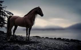 free hd horse wallpaper