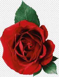 روز زهرة التوضيح النبيذ الورود الحمراء الأرجواني والنبيذ