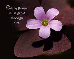 nature break flower quotes nature quotes flowers