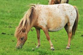 can mini horses eat oats answers from