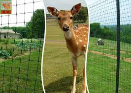 Plastic Deer Fence Netting Garden Deer Mesh Fencing 1 2 Meters Height For Sale Deer Fence Netting Manufacturer From China 108516030