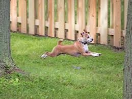 Four Things To Consider When Choosing A Dog Friendly Fence Outdoor Essentials
