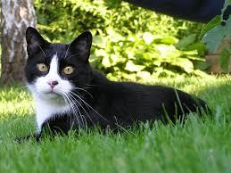Prikka Strip Cat Squirrel Repeller Repellent Fence Spike Bestpestcontroluk