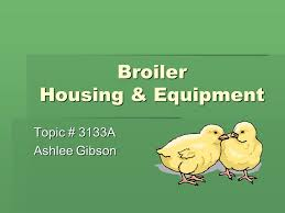 Broiler Housing & Equipment Topic # 3133A Ashlee Gibson. - ppt download